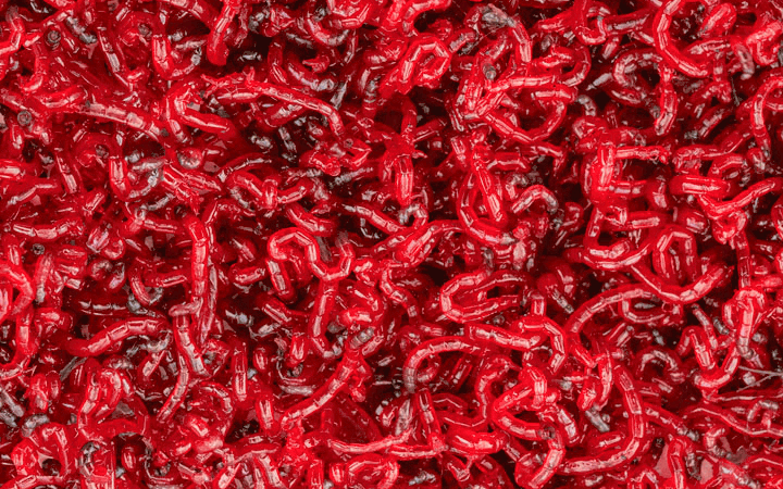 Bloodworms in a giant pile