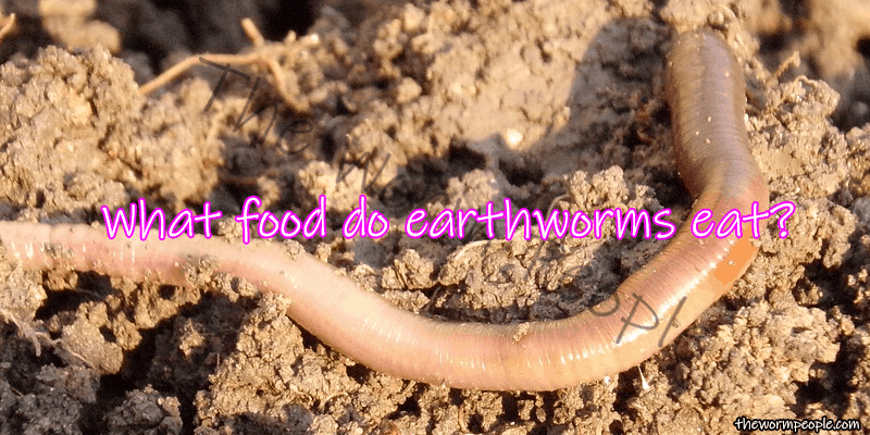What do earthworms eat