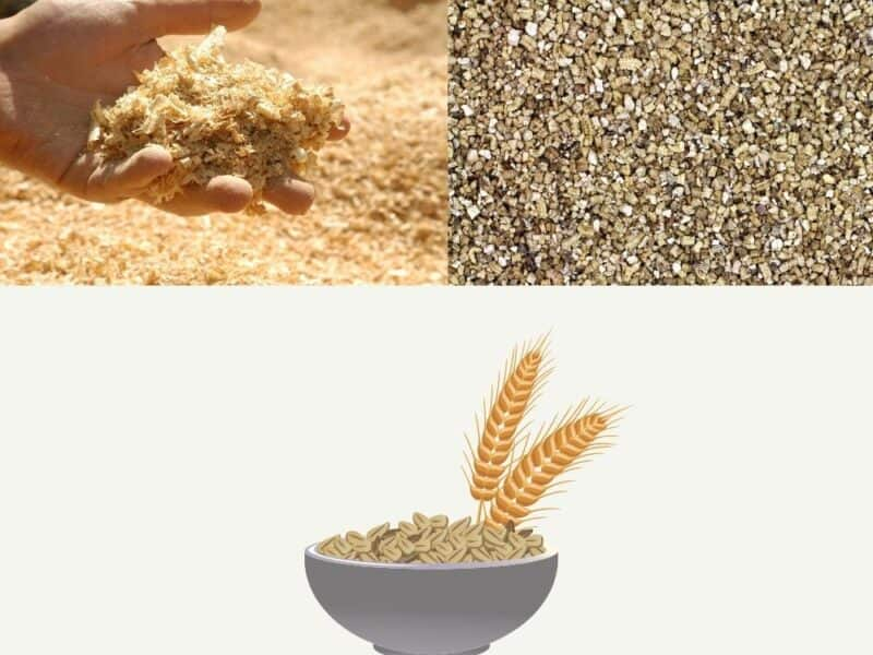 Alternatives to traditional mealworm substrate