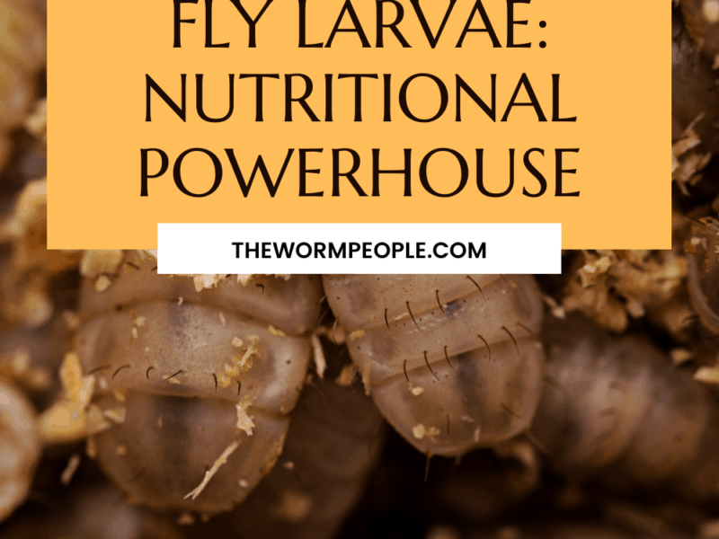 black-soldier-fly-nutritional-value