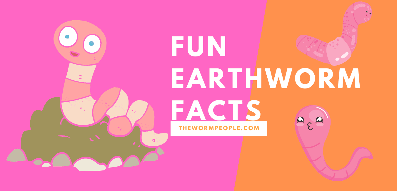 Facts on Earthworms