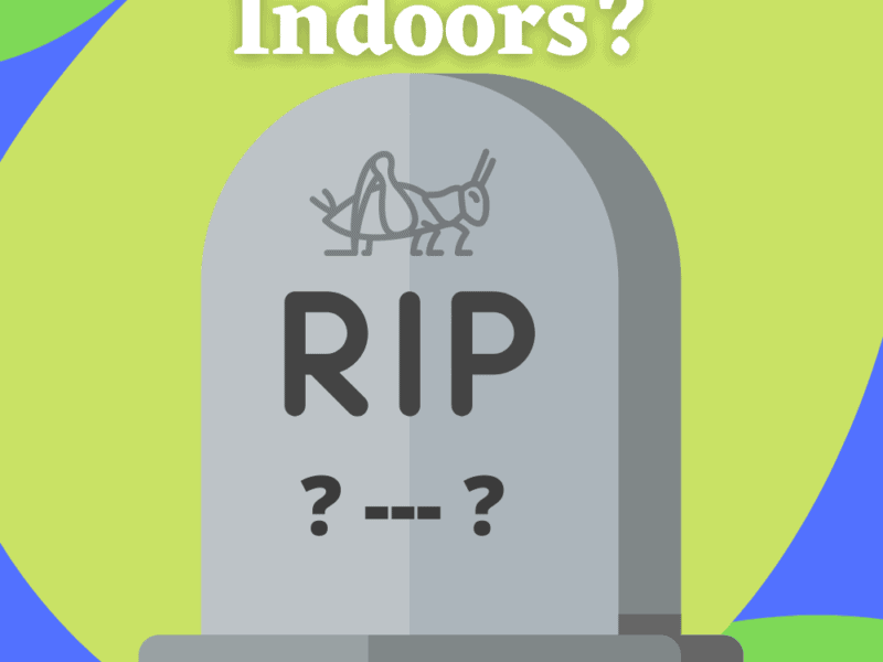 How Long Do Crickets Live Indoors