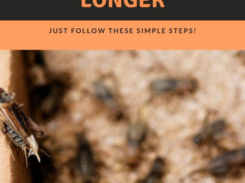 how-to-keep-crickets-alive-for-feeding