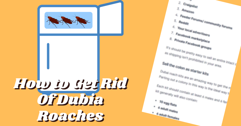 How to Get Rid Of Dubia Roaches
